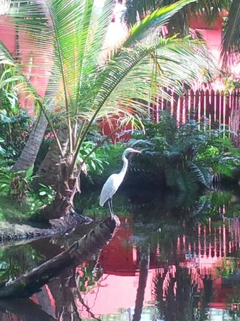 Grand Paradise Samana : Pond by our room