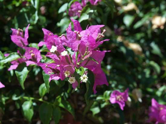 Carimar Beach Club: Beautiful flowers and plants surround your condo.