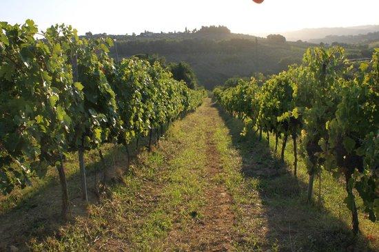 Azienda Agricola Ammirabile: The vineyards