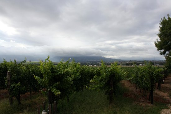 Lovane Boutique Wine Estate and Guest House : Nice view of the hills