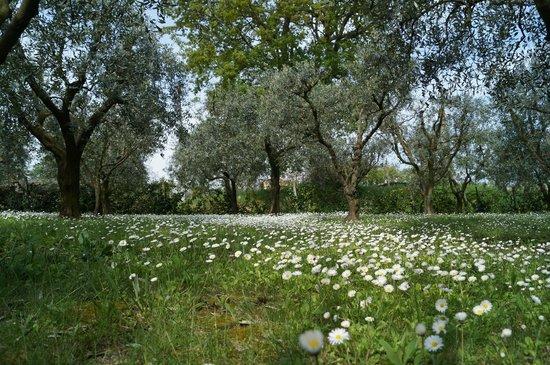 Agriturismo L'Isola che non c'è : giardino degli olivi