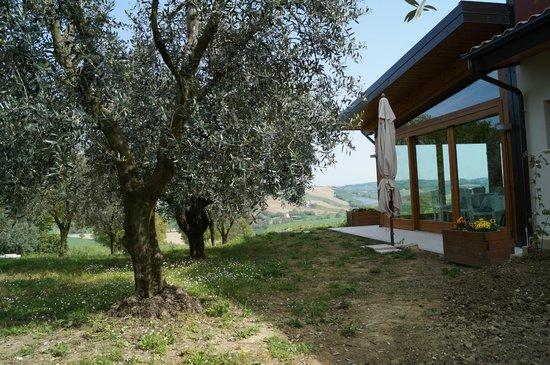 Agriturismo L'Isola che non c'è : giardino degli olivi e veranda ristorante