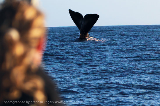 Inia Whale Watching: Inia 1 Spermwhale
