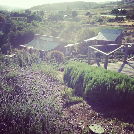 ‪Keys Creek Lavender Farm‬