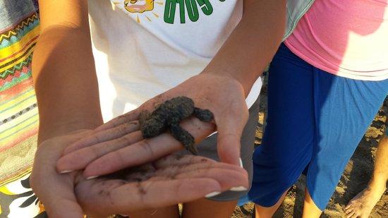 Casa Magna Marriott Puerto Vallarta Resort & Spa: Releasing a baby Turtle into the Ocean!