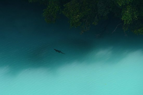 Palau Pacific Resort: The crocodile at Milky Way (as pictured from the helicopter)