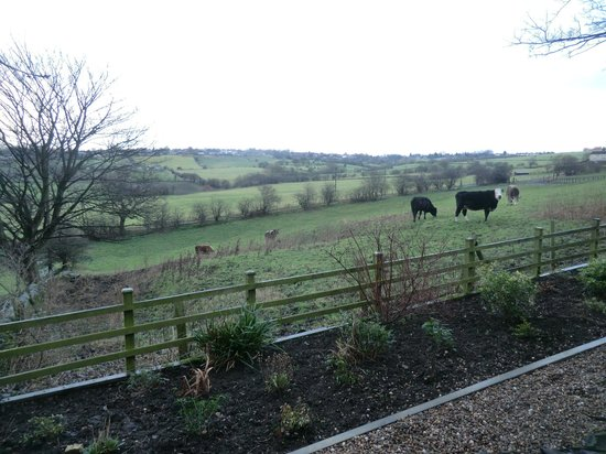 The Lodge @ Birkby Hall: Looking across the fields