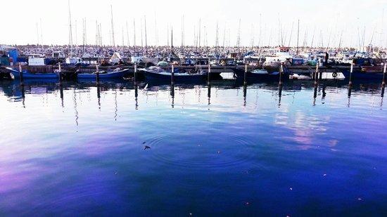 Ashkelon, Israel: My marina