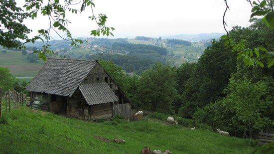 Podcetrtek, Slovenia: Apartments Plevnik местность