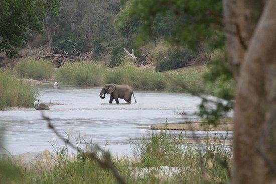 Kurhula Wildlife Lodge: Deze olifanten kwamen naar de lodge