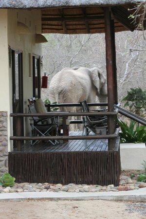Kurhula Wildlife Lodge: Op 2 meter van de kamer dus binnen blijven