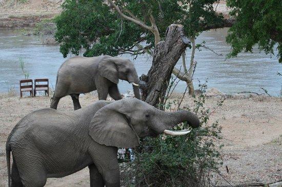 Kurhula Wildlife Lodge: 2 olifanten kwamen  de bomen snoeien