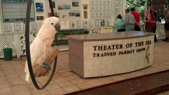 Theater of the Sea: Great educational bird show