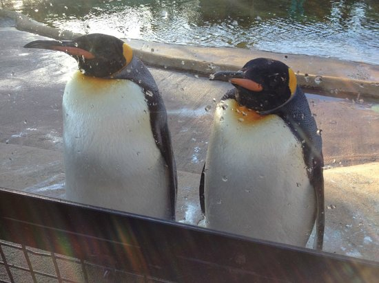 Edinburgh Zoo: Penguins