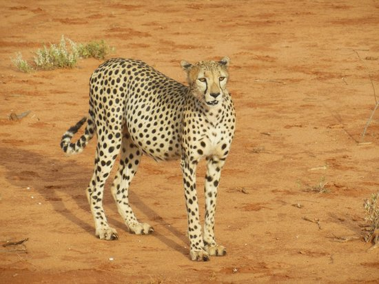 Safari Kenya Watamu - Day Tours: Tsavo Est