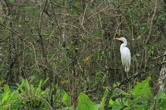 Corkscrew Swamp Sanctuary: Ibis