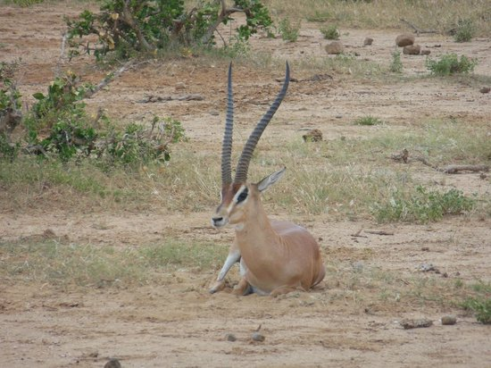 Safari Kenya Watamu - Day Tours : Tsavo Est