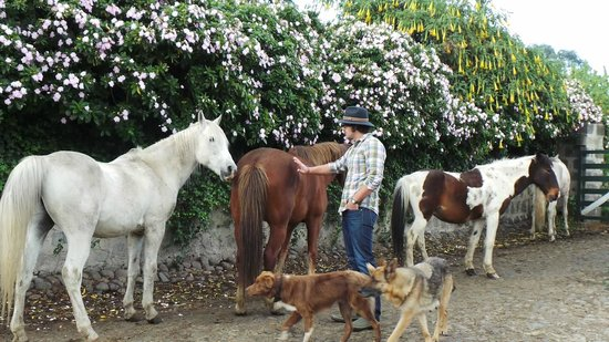 Hacienda La Alegria: Horses and dogs wander around the farm free