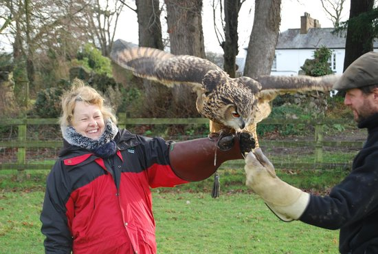 Pentre Mawr Country House: Frank [the Owl] Richard and an able assistant