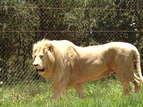 Lion and Safari Park: L