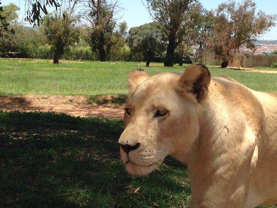 Lion and Safari Park: Very near ;)