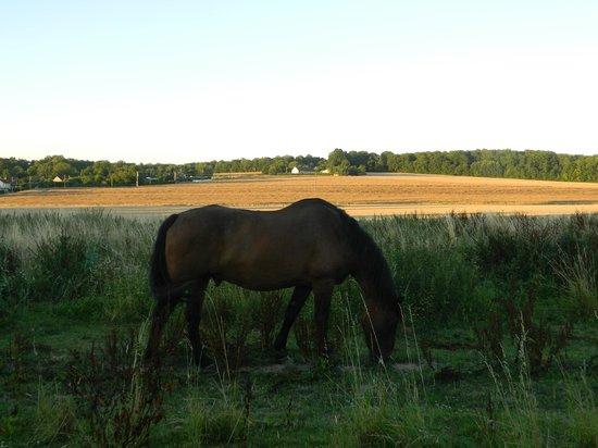 Le Relais De Libreval: Notre cheval au pré