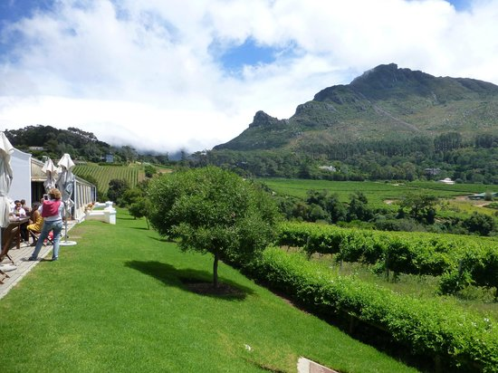 Constantia Glen Winery: The view