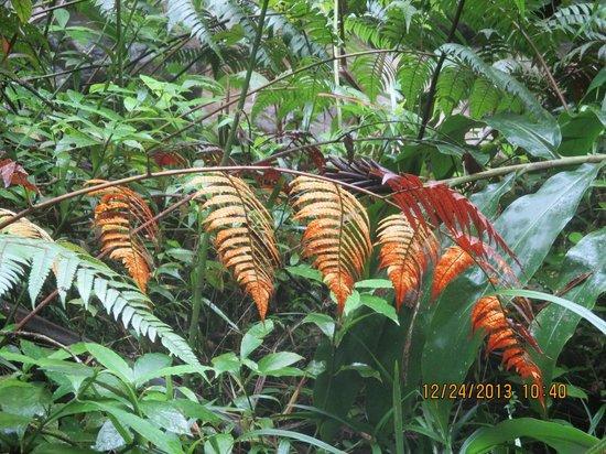Yokahu Kayak Trips, Inc. : Orange leaves in the rainforest