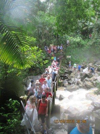 Yokahu Kayak Trips, Inc. : The bridge at La Mina Falls