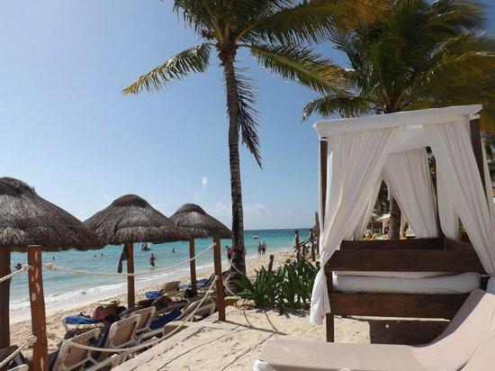 The Reef Coco Beach : Playa