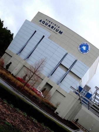 Manta Ray Touch Pool Picture Of Virginia Aquarium