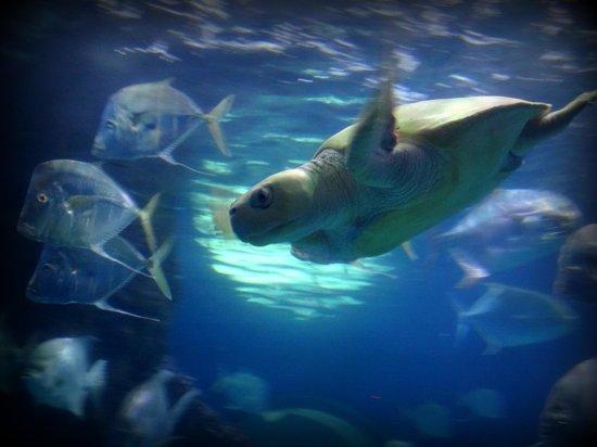 Manta Ray Touch Pool Picture Of Virginia Aquarium Marine Science Center Virginia Beach