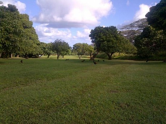 Kahili Mountain Park: View in Front Yard