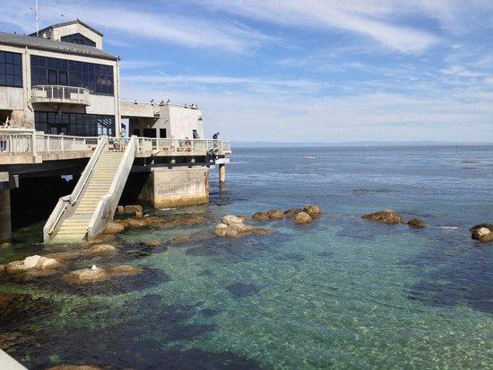 Vida Marinha Sea Life Picture Of Monterey Bay Aquarium