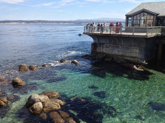 Monterey Bay Aquarium: Vista da baía de Monterey