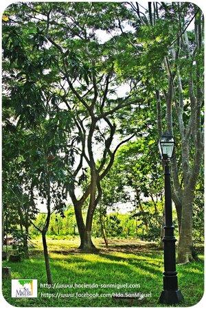 Hacienda San Miguel : Áreas verdes