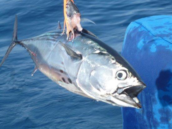 Sunscape Dorado Pacifico Ixtapa: fishing trip