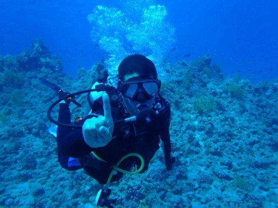 Sinai Dive Club : Taken with my underwater camera.