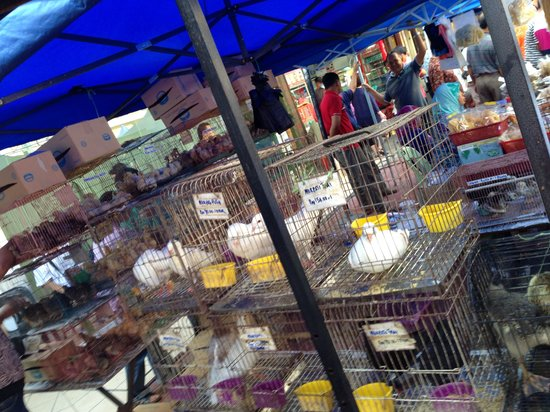 Gaya Street Sunday Market: Selling birds