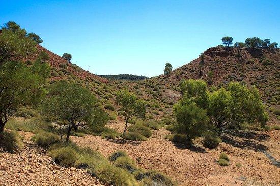 Dinosaur Stampede at Lark Quarry Conservation Park: Australian Outback