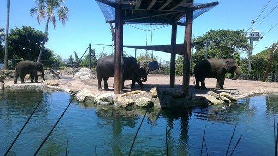 Taronga Zoo: Elephants