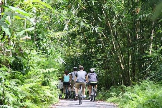 Bali Hai Bike Tours : Tracks
