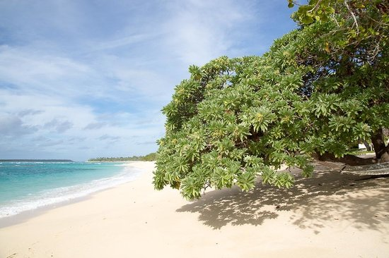 Sandy Beach Resort: The best beach on Tonga, all the bungalows are just behind trees right in the left