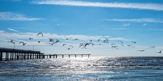 The Seawall: Seagulls flying in the sunshine near the 61st Street Pier in Galveston