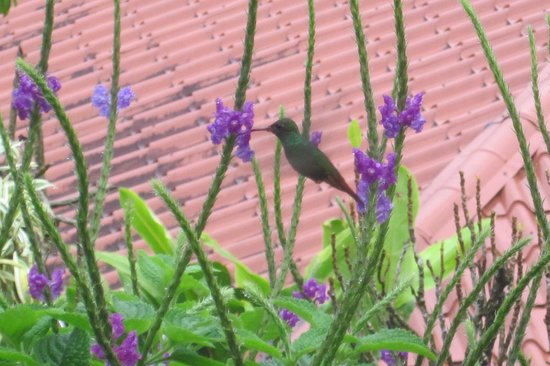 Linda Vista Hotel: Hummingbird off our porch