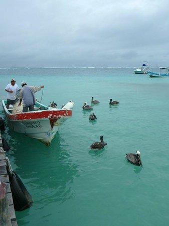 Layla Guesthouse : Puerto Morelos dock