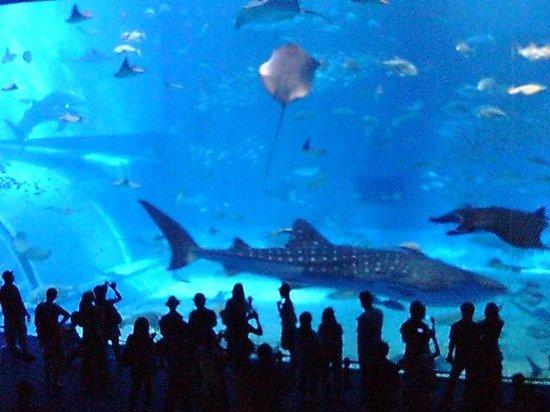 Okinawa Churaumi Aquarium: 黒潮への旅