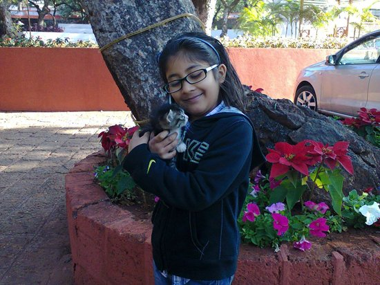 Citrus Chambers Mahabaleshwar: My daughter Anya with a abandoned kitten