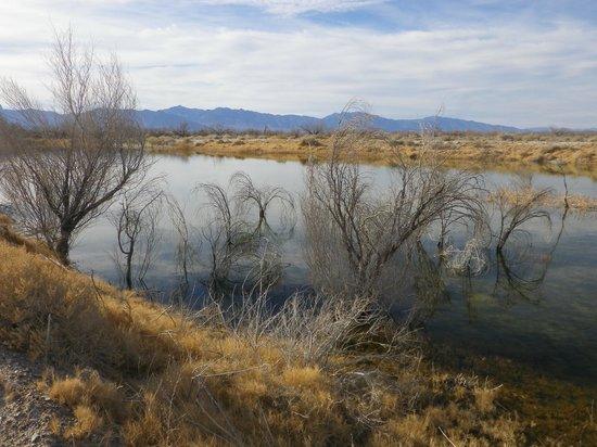 Ash Meadows National Wildlife Refuge : Lowlands off Crystal Lake...marshes