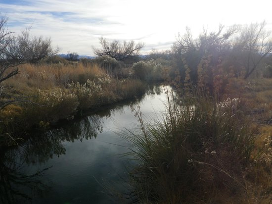 Ash Meadows National Wildlife Refuge : Another view of the stream